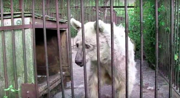 Эта медведица по имени Фифи ждала 30 лет чтобы ее спасли