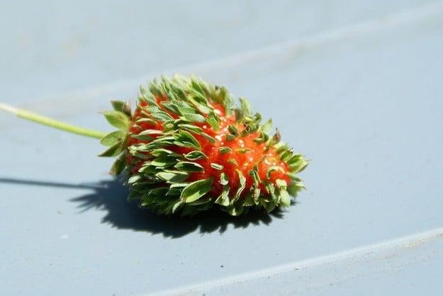 Сеть взорвали новые фото мутантов из Фукусимы: розы с щупальцами и кошмарные овощи