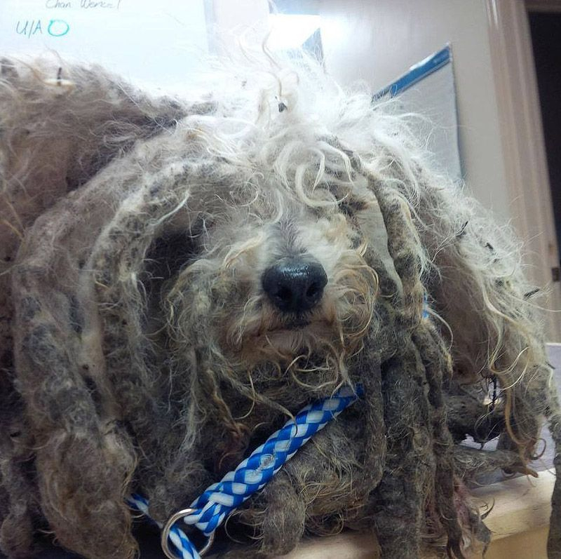 История брошенной и несчастной собаки по кличке Шрек животное, жизнь, питомец, собака