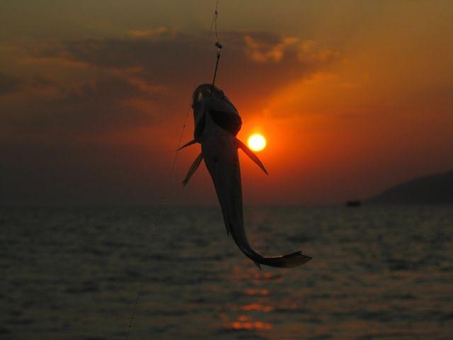 рыбалка на окуня в черном море