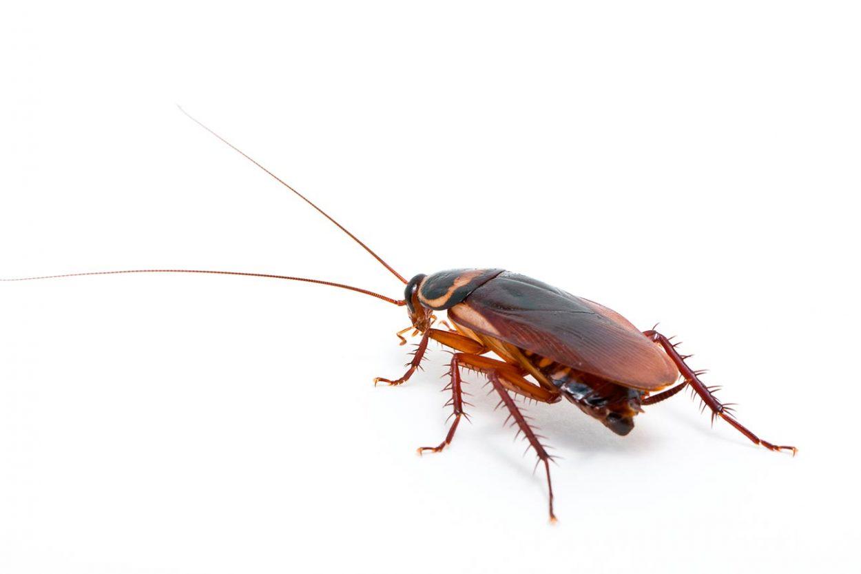 Тараканы идругая живность к…