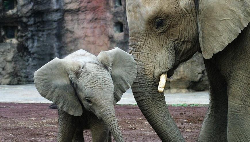 Мать слониха этого не забуде…