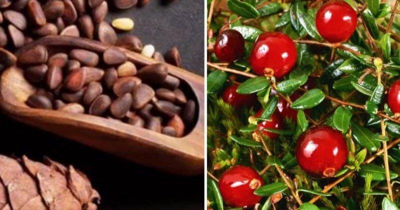 7 суперпродуктов, которыми может похвастать российская земля Полезные, за границей, не знают, продукты, россия