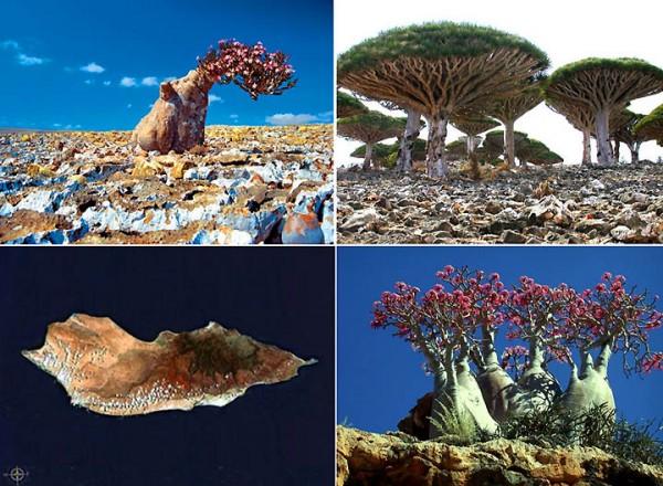 Сокотра остров небывалых чудес природы