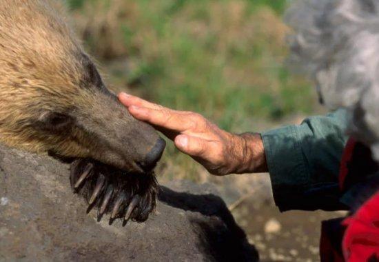 Как предотвратить появление дикого медведя на жилых территориях?