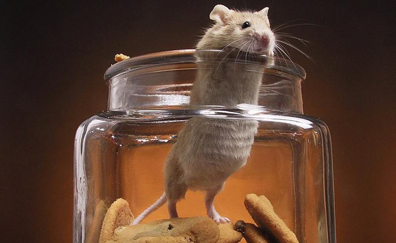 Мышка и печенье: никогда не сдавайтесь! видео