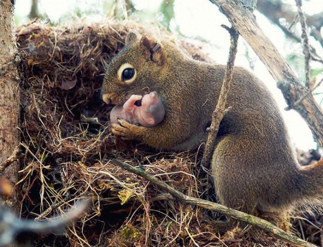 Быть настоящей Мамой животные, любовь, мамы