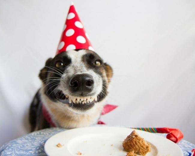 Открытка с днем рождения с животными прикольными 79