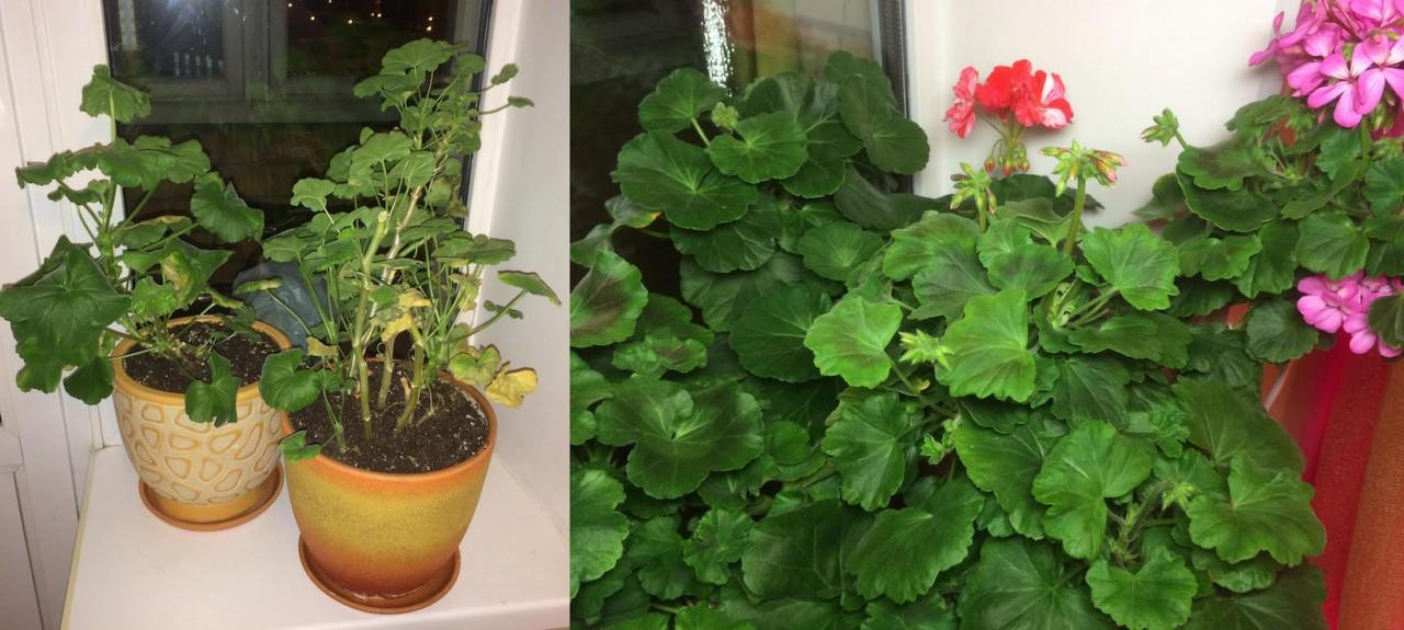 Как легко и без усилий реанимировать хилые домашние цветы! Доступные новейшие LED-технологии!