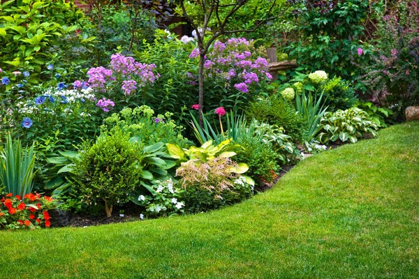 Многолетние растения для миксбордера