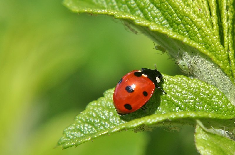 Интересное о насекомых
