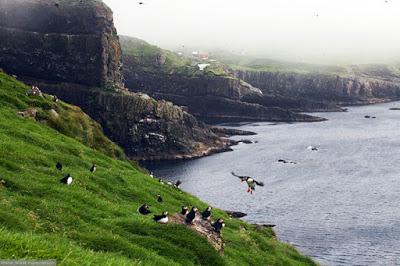 45 фото Фареры: остров птиц