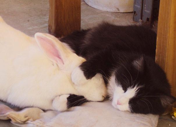 Спят усталые зверушки  животные, сон