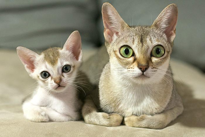 23. Акела и Джинджергиндза котенок, кошка
