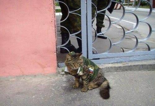 Неопровержимые доказательства присутствия российских войск на Донбассе