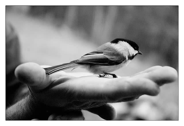 Птица в руках
