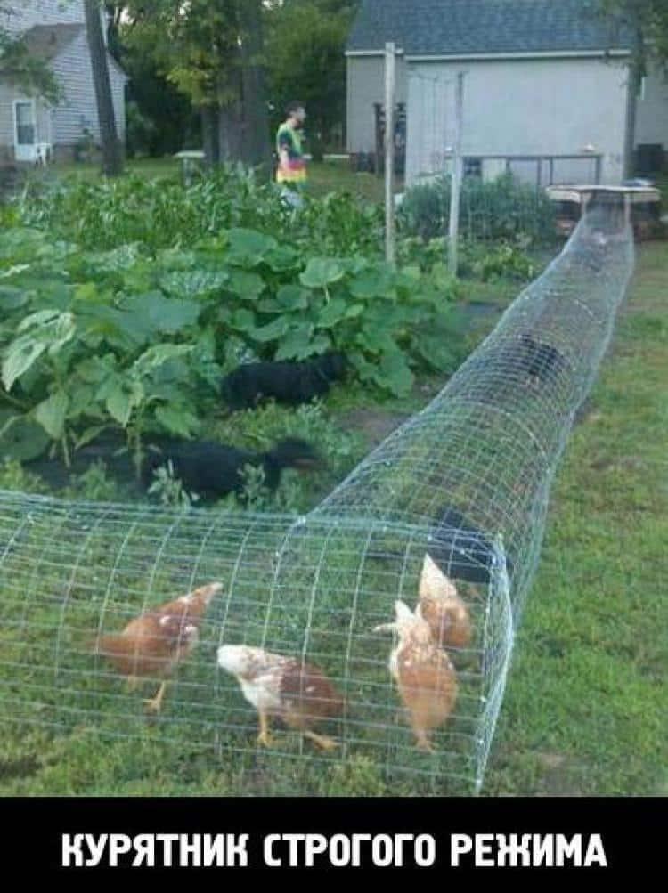 Глядя на эти фото, ты будешь смеяться так, что сбегутся соседи!