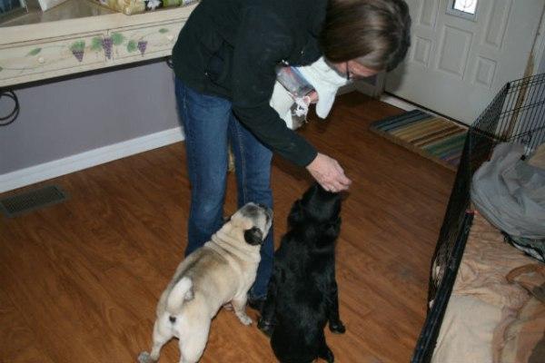Женщина тратит всю свою пенсию, на содержание беспомощных ненужных никому собак