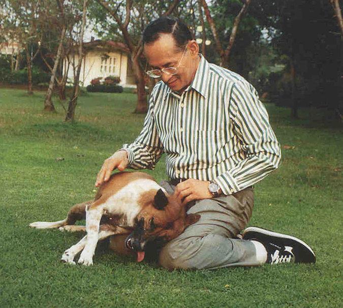 37 лет тюрьмы за оскорбление царственной собаки