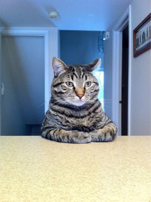 lolcats79 100 лучших фотографий кошек всех времен и народов