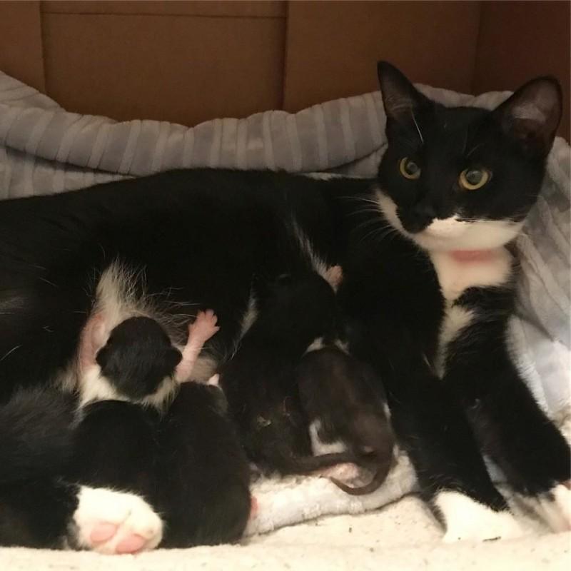 Бродячая черно-белая кошка р…