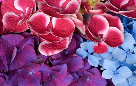 Самые дорогие цветы в мире 9-е место