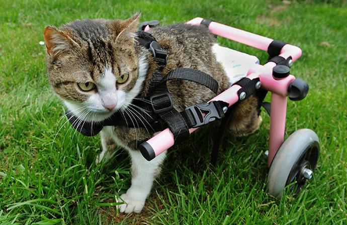 Кошка получила вторую жизнь!