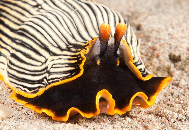 какой элемент накапливают моллюски