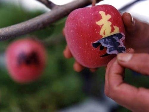 Яблочки с татушками