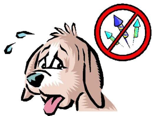 Ветеринар: как избежать паники у собак из-за фейерверка в Новый год