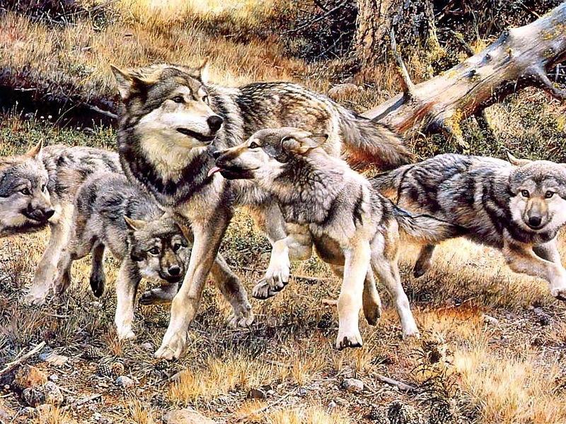 Волки художника анималиста Карла Брендерса