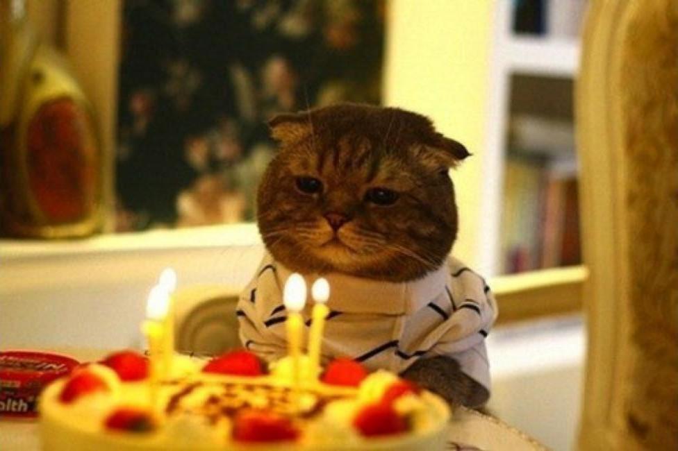 lolcats99 100 лучших фотографий кошек всех времен и народов