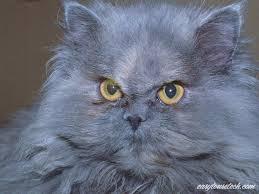 Рассказ история про любовь мужиков котов и девушек кошек.