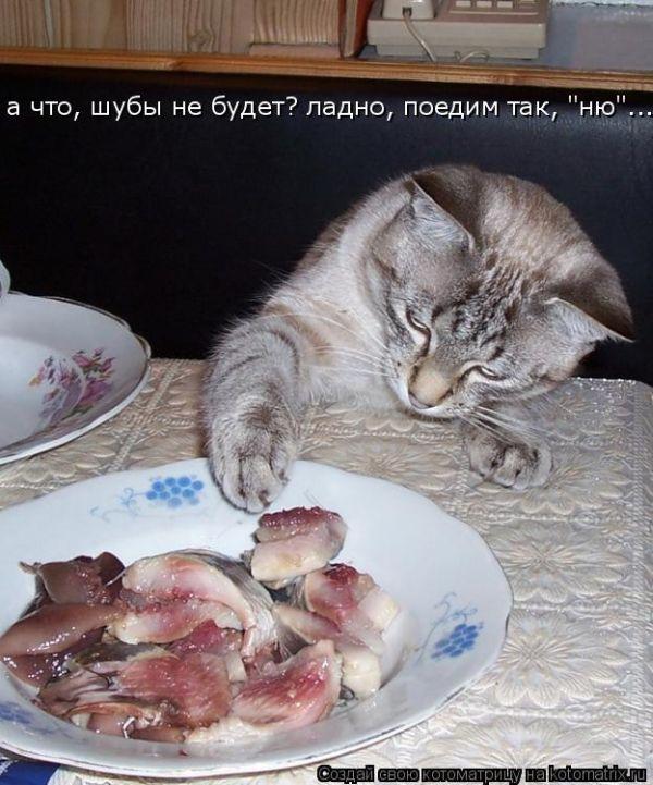 Лучшие котоматрицы недели (2)