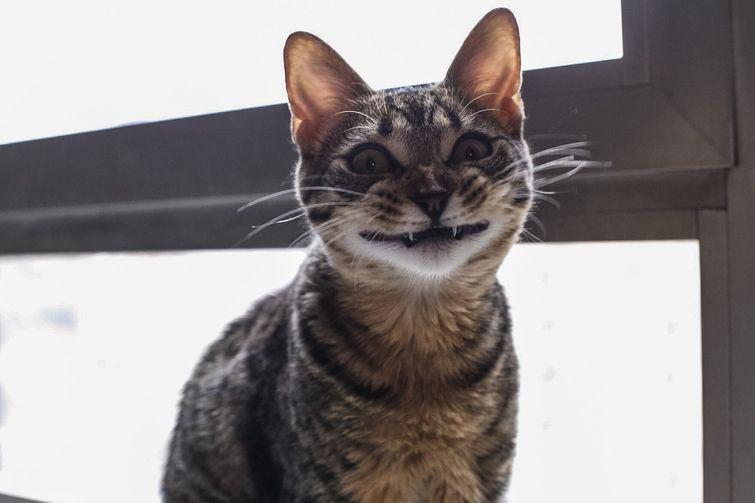 25 смешных котов, которые яв…