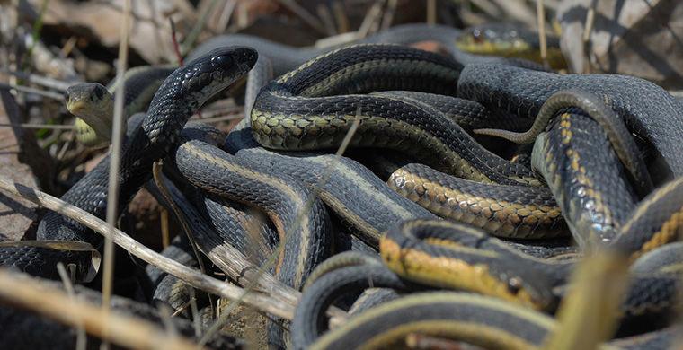 6 представителей животного мира, способных менять свой пол гермафродит, животные, пол