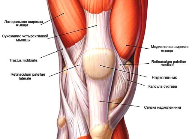 Упражнения для растяжки связок коленного сустава таблетки для суставов для собак