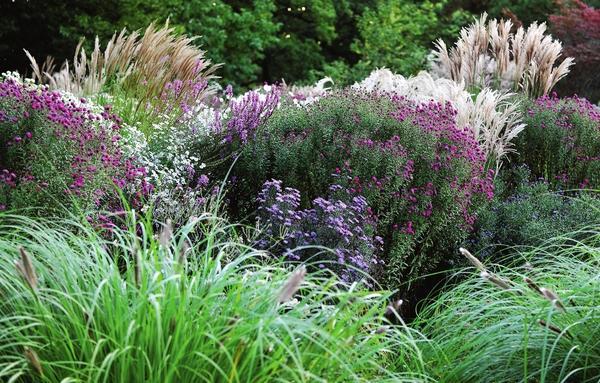 Злаковые травы: вне времени, вне сезона