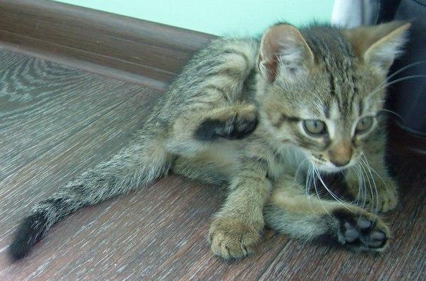 История Шелдона животные, история, кот