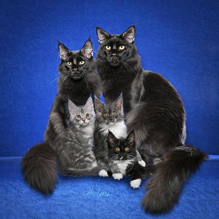 фото котята коты и кошки