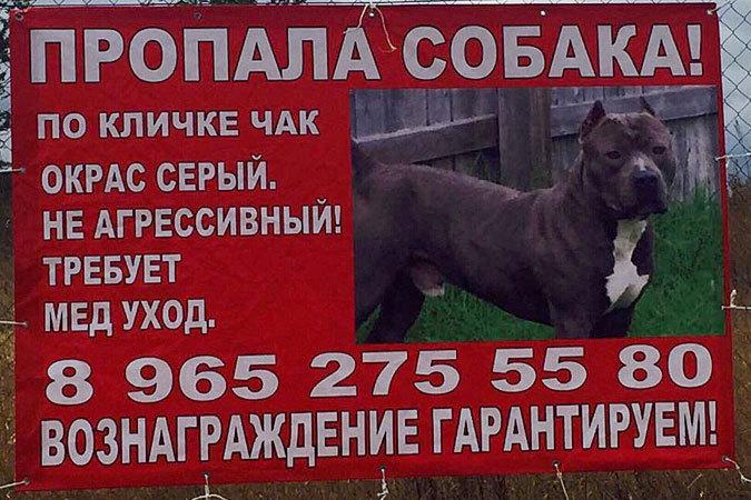 Хозяева пропавшего пса разбили палатку под Воронежем, чтобы его дождаться