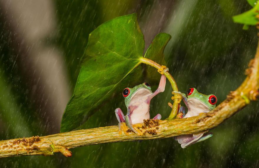 «Иди поближе, поместимся!» животные, зонтик