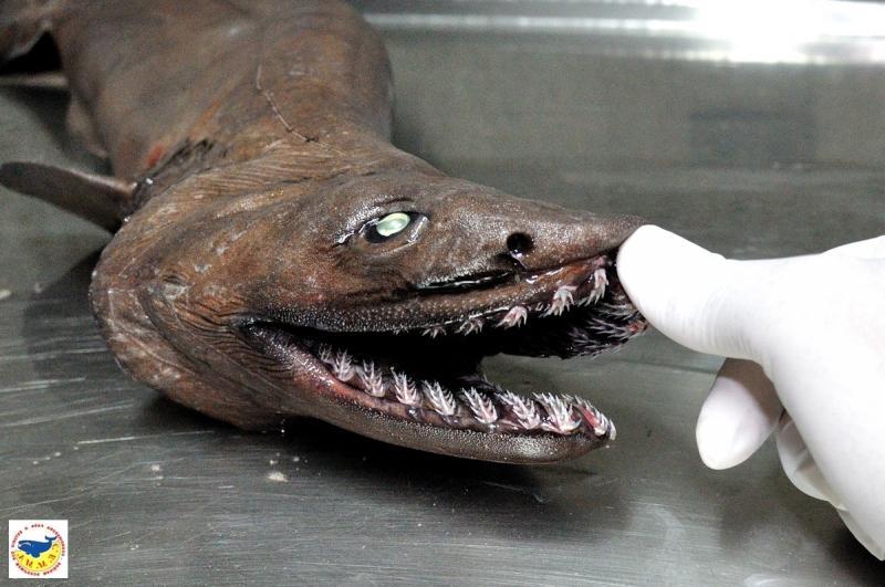 Доисторический монстр пойман в Австралии