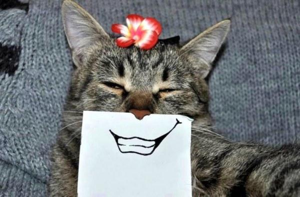 Кошачьи эмоции (7 фото)