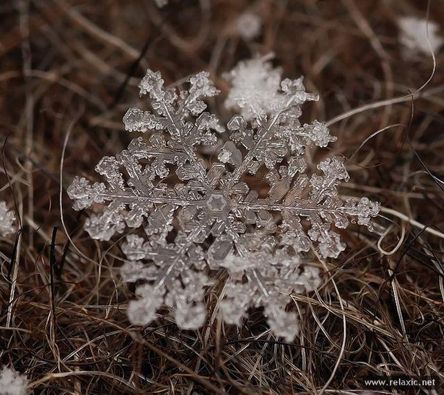 Снежинки: макро (78 фото)