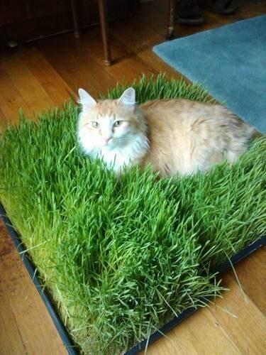 Коврик из травы для кота
