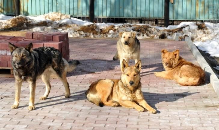 Я ненавидела дворовых собак. Это звери, бросающиеся с лаем на прохожих и гадящие в дворах, а потом