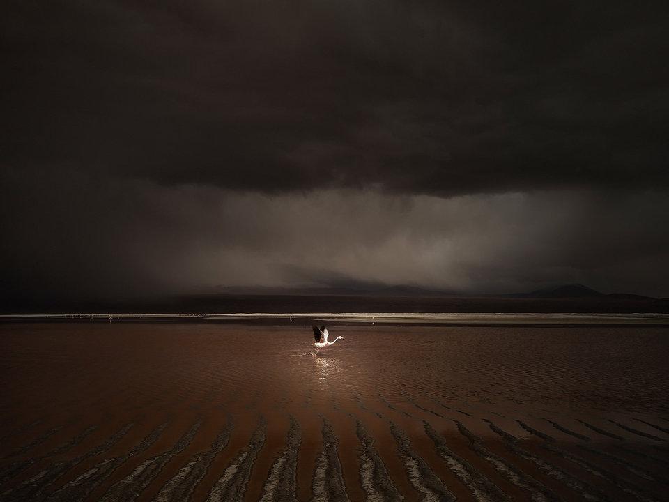 Победители международного фотоконкурса пейзажной фотографии (International Landscape Photographer Of The Year 2015)