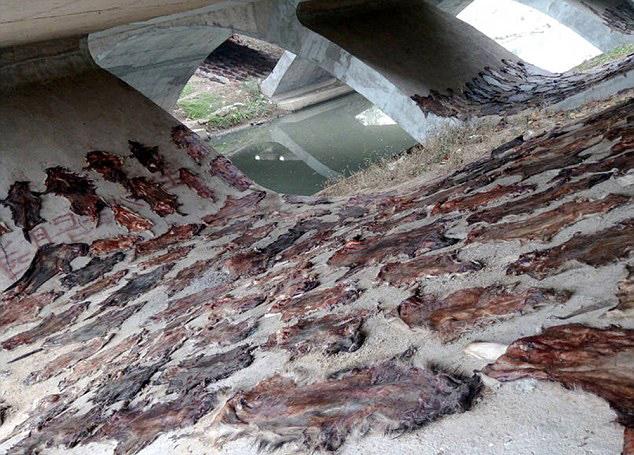 Сотни собачьих шкур нашли под мостом в Китае