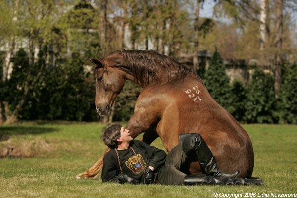 15 мифов о лошадях или Зачем…
